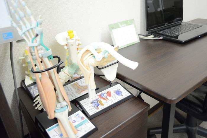 ご説明用の骨模型1