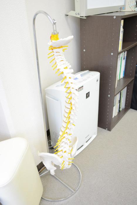 ご説明用の骨模型2